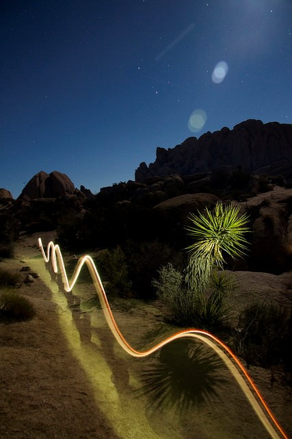 nighttime photo of a moonlit boulder landscape, the spiked blades a single yucca plant are illuminated and a wavy line of glowing light extends down a path into the distance