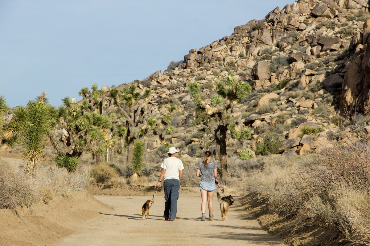 Visitors walk their leashed dogs along the Bighorn Pass Road. NPS / Brad Sutton