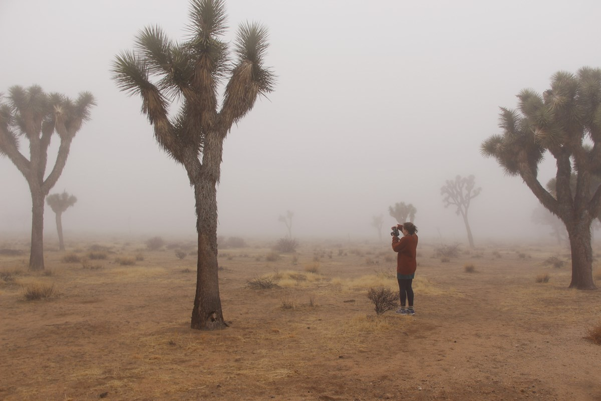 Photographer standards with their back to the camera, taking photos of Joshua trees in the fog.