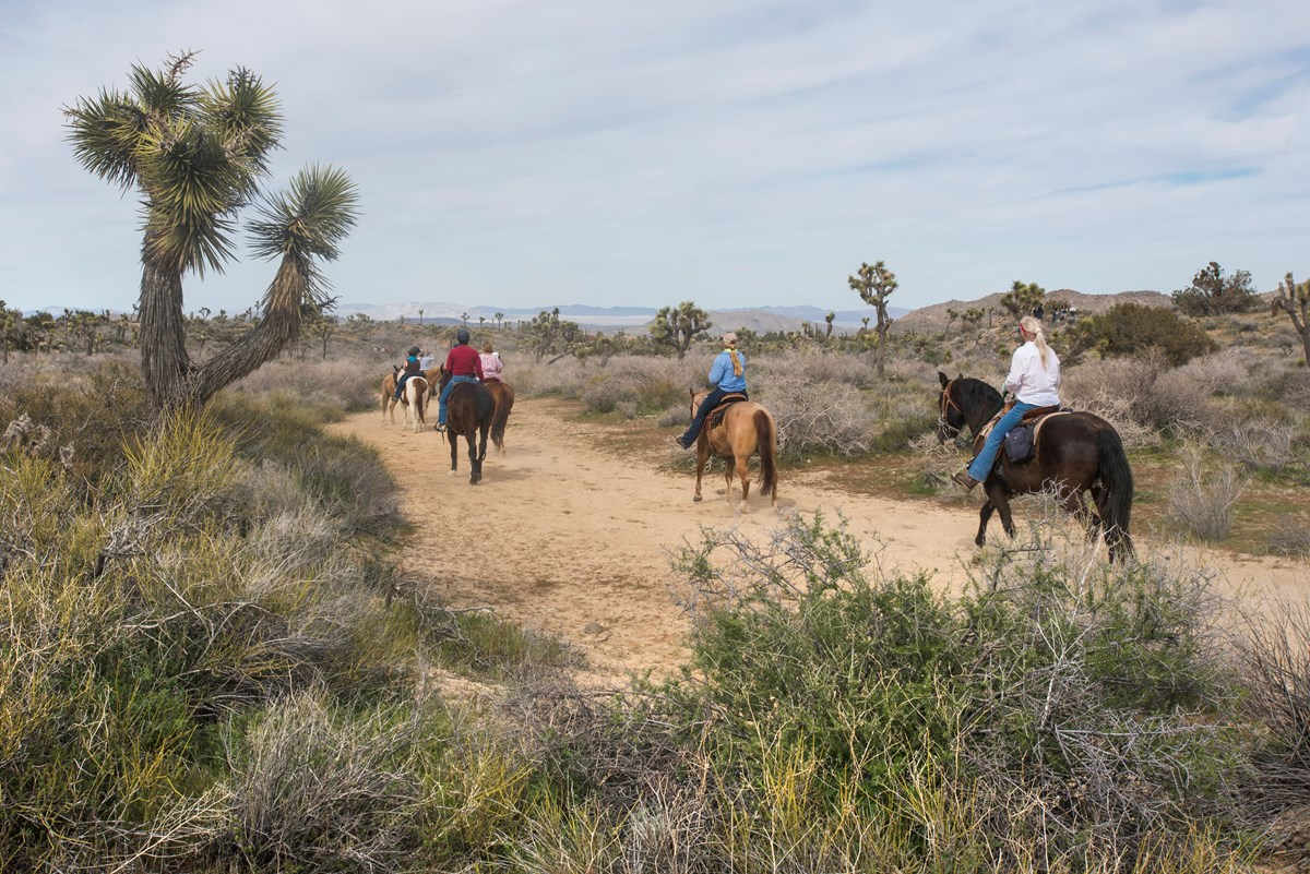A group of horseback riders along a dirt trail