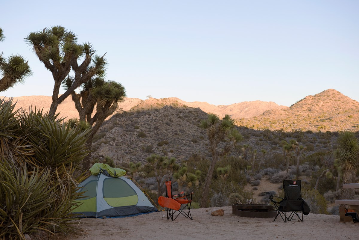 Color photo of a tent campsite set up at dusk with a Joshua tree overhead. NPS / Hannah Schwalbe