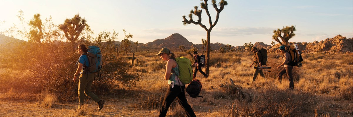 color photo of five hikers with large backpacks on walking spread apart from right to left in late afternoon light through sparse desert vegetation