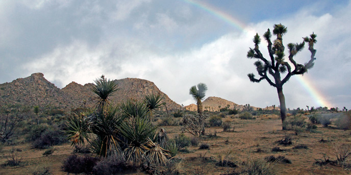 a rainbow arcs over rocky hills and Joshua trees