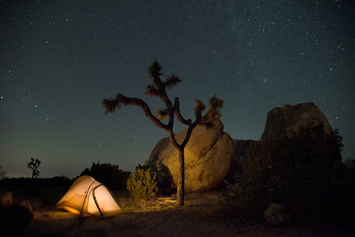 Color photo taken at night with a tent, Joshua tree, and night sky. NPS / Hannah Schwalbe