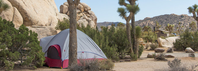 a tent set up among Joshua trees at Ryan Campground