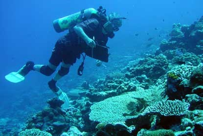 Diver monitoring park coral reef.