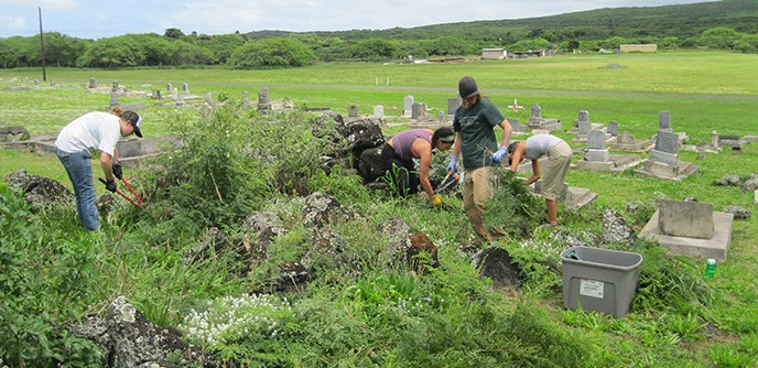 Volunteers removing invasive vegetation at Kalaupapa