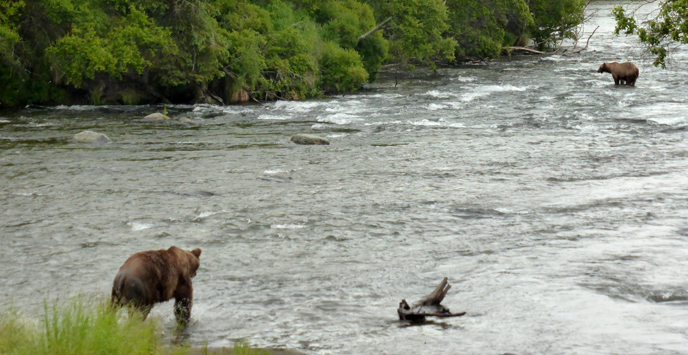 Bear 856 follows bear 402 downstream of Brooks Falls