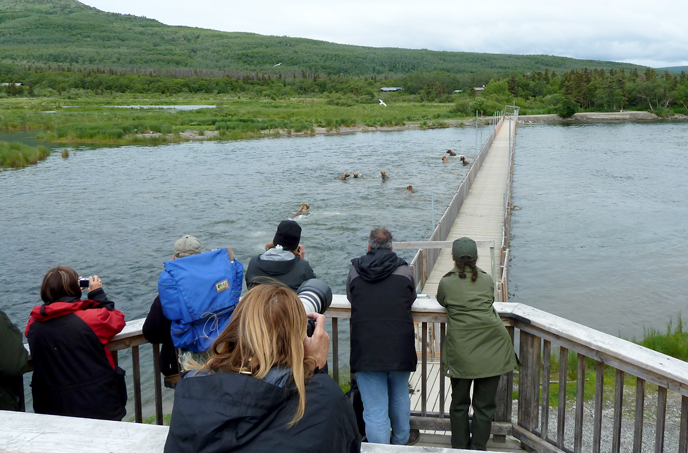 People on elevated deck watching watching many bears splashing in water near a bridge.