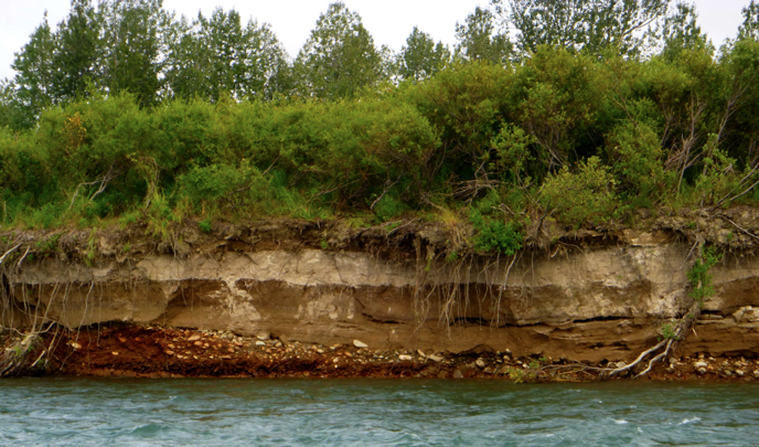 Cut bank on Kamishak River with ash layer from 1912 eruption