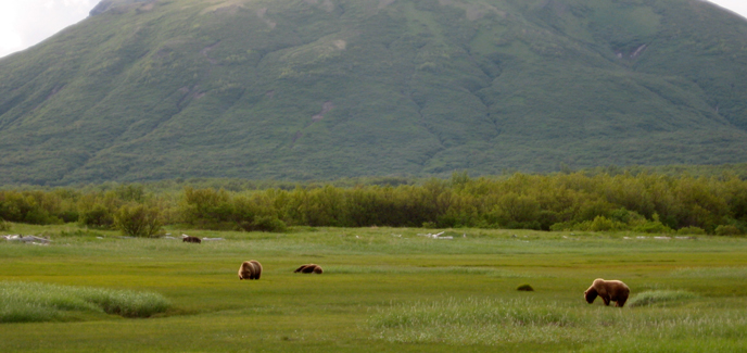 Hallo-Bay-bears-688-px.jpg
