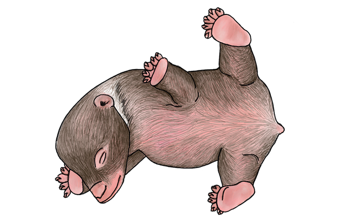 illustration of a newborn bear cub