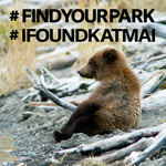 Bear cub sitting upright. Text says hastag Find Your Park, hashtag I Found Katmai.