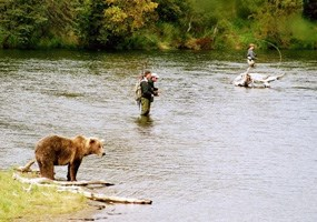 Two- and four-legged fishermen compete along the Brooks River.