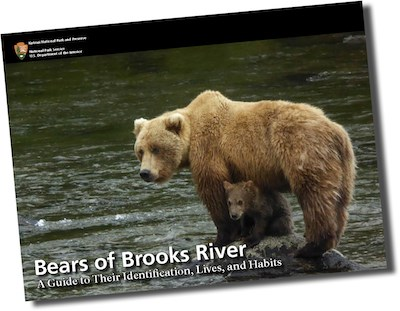 Bears of Brooks River 2016 cover: a bear with cub stands on a rock in a river.