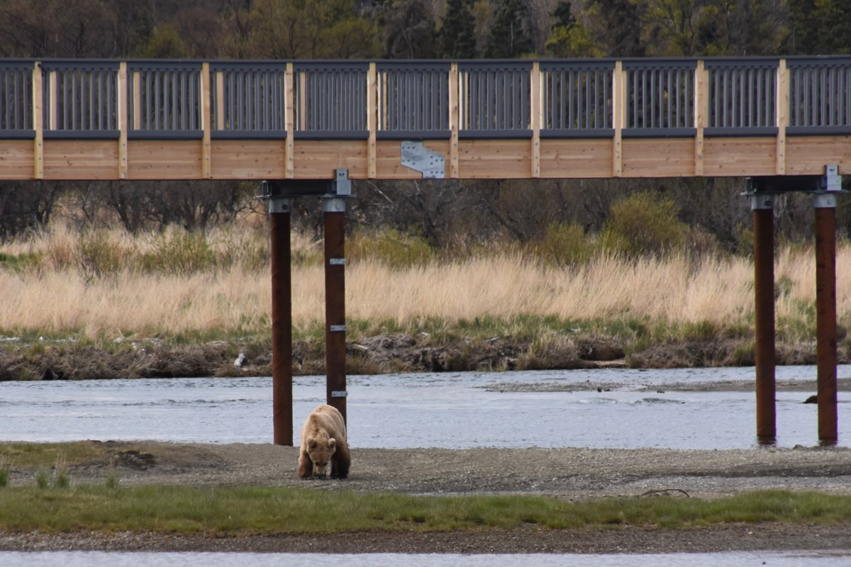 one brown bear below a bridge across a river