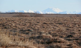 Wet Tundra on the Bristol Bay Lowlands