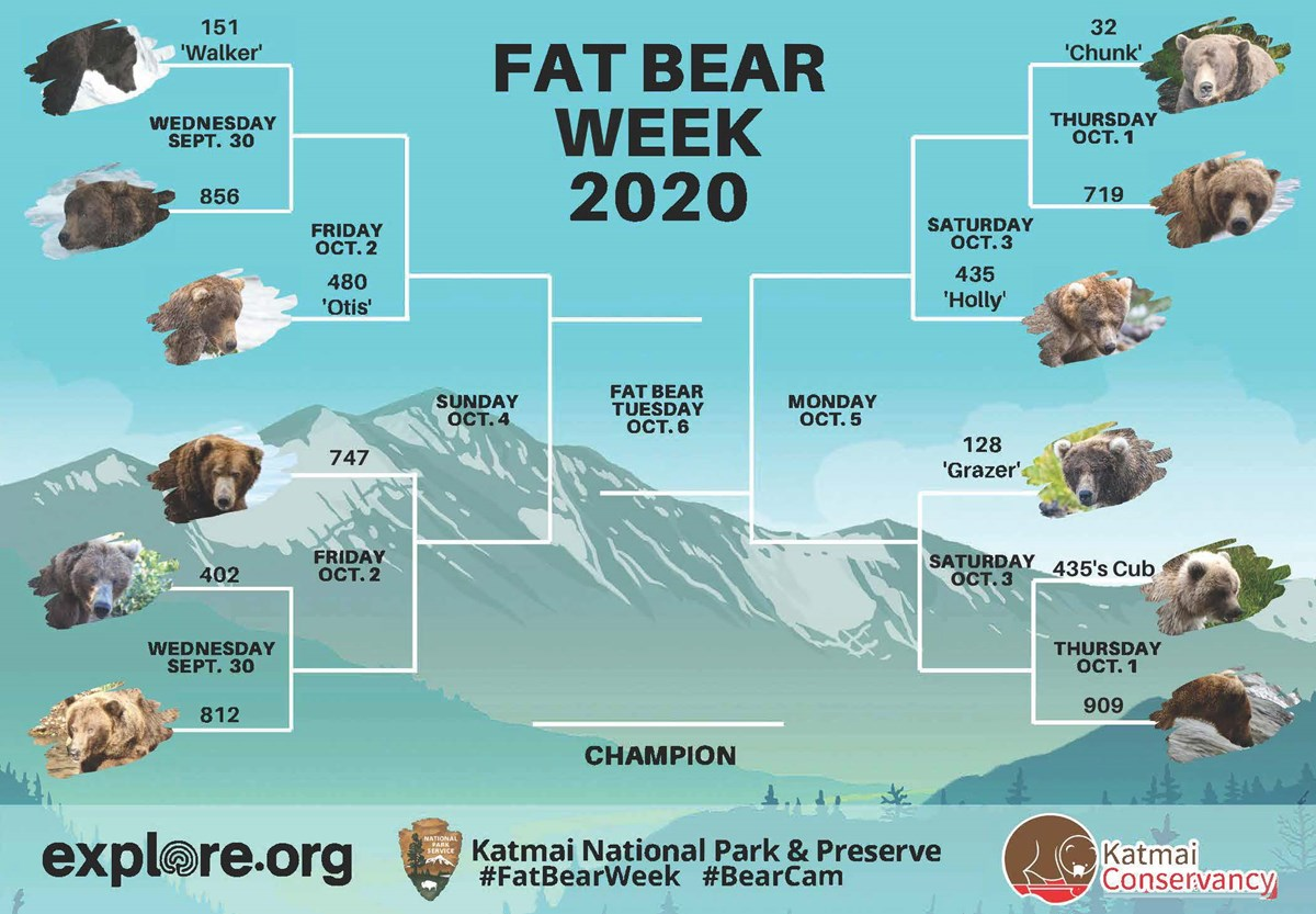 A chart that shows the competition brackets for bears for the 2020 Katmai Fat Bear Week event