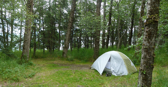 Tent-in-the-Brooks-Camp-Campground