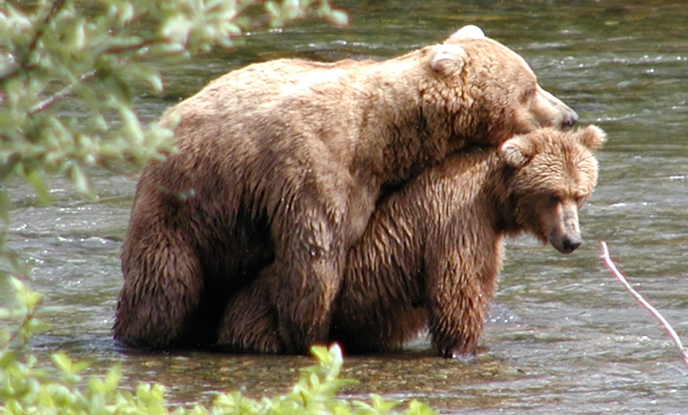 Brown Bear Frequently Asked Questions - Katmai National ...