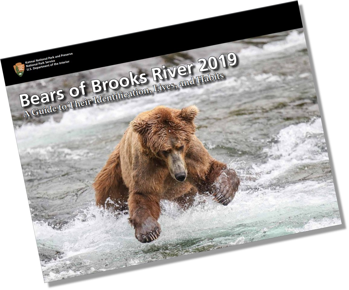 Bear Book 2019 cover