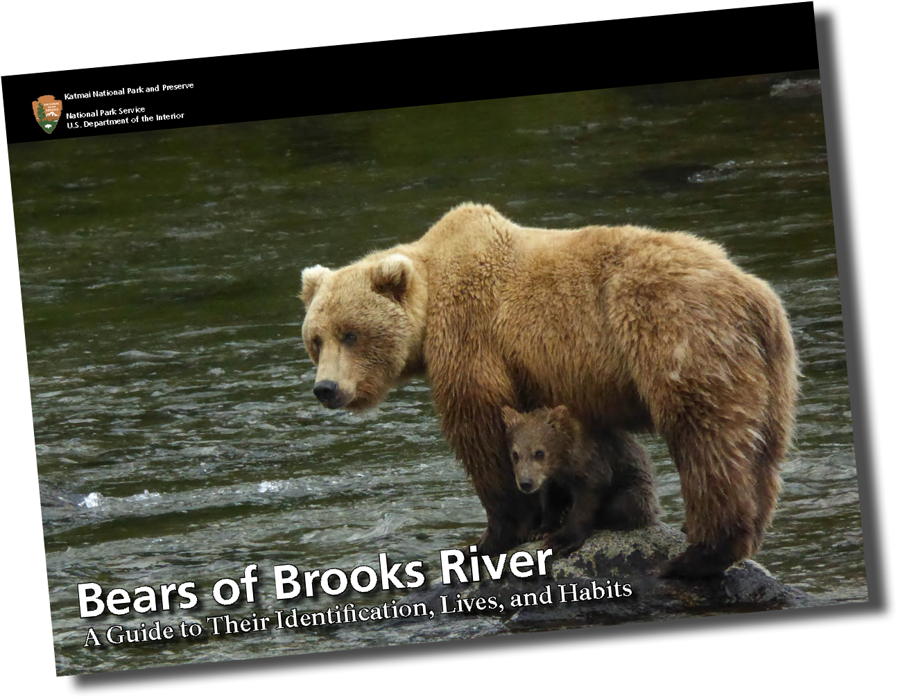 Cover of 2016 Bears of Brooks River ebook