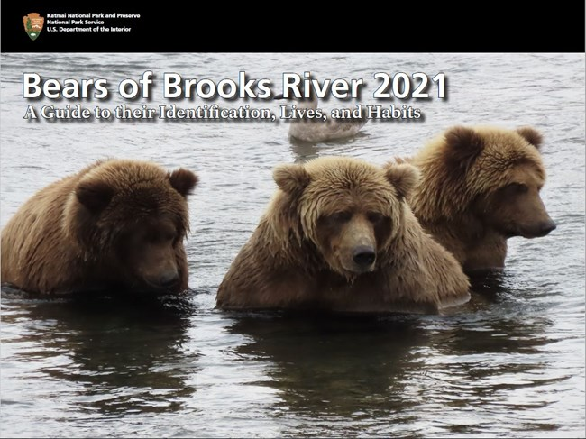 Cover of book featuring three bears in water