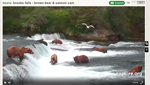 Brooks-Falls-bearcam