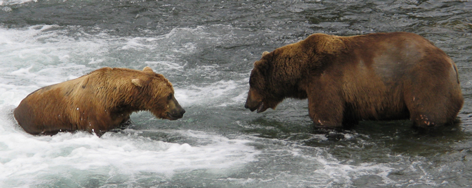 Bears at Brooks Falls (218 Ugly on the left and 24 BB on the right)
