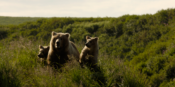 Bear-family-in-grass