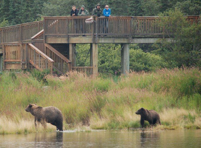 Bears walking near elevated platform. People standing on platform.