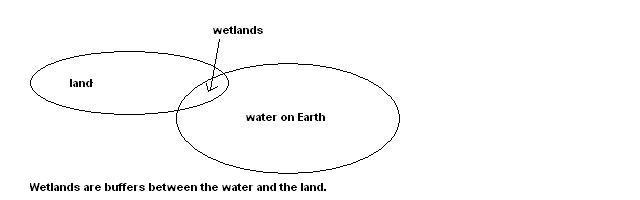 Wetlands are a buffer between land and water.