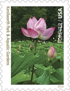 A pink water lotus arching toward the sky in Washington, D.C.'s Kenilworth Park & Aquatic Gardens is featured on the 11th of 16 Forever Stamp image.