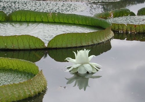 flower reflected in water
