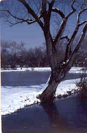 the peace of winter covers the ponds