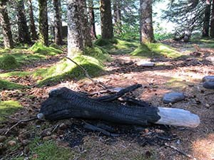 A large piece of downed tree on the forest floor, which has been charred from a campfire.