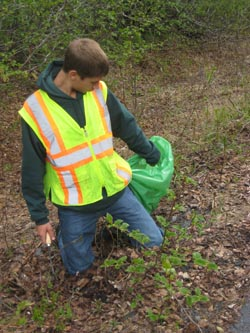 Brandon Pulling Invasive Plants