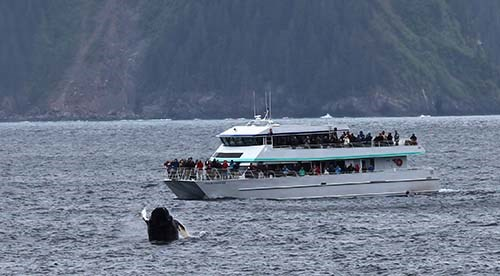 A humpback whale breaches in front of a tour boat full of people.