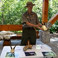 A park ranger holds a mountain goat skull for visitor during a presentation at the pavilion in the Exit Glacier Area.