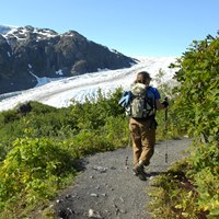 A visitor hikes along a path through green shrubs, overlooking Exit Glacier.