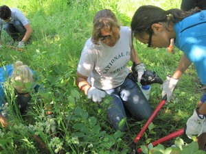 Youth volunteers use loppers to complete landscaping work.