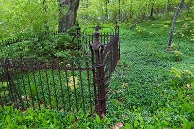 A tall cast iron fence is filled in and surrounded by plants.