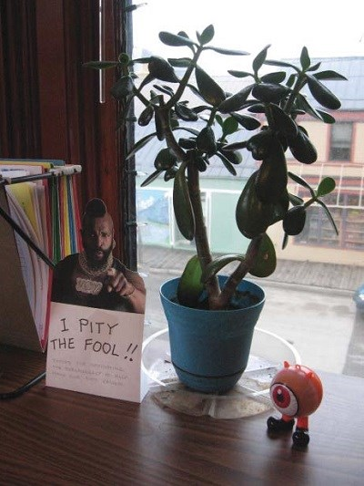 "A plant, toys, and a man with a sign ""I pity the fool!!"" sit on a desktop."