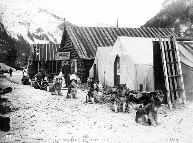Black and white photo of a dog sled waiting alongside tents and rough cabins