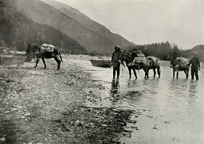 Black and white photo of two men and four mules crossing a river