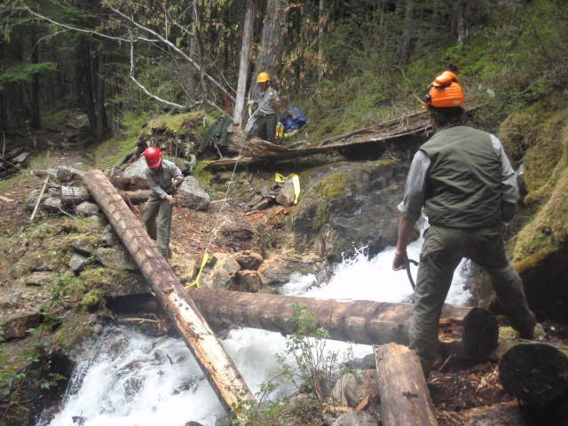 Three people work near a fallen logs spanning a forest stream