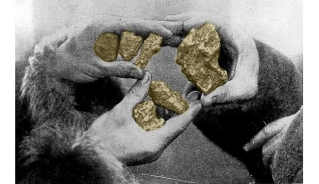 Three hands hold up three gold nuggets