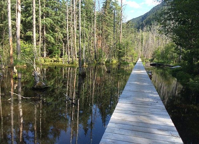 A boardwalk appears to float above a serene forested pond
