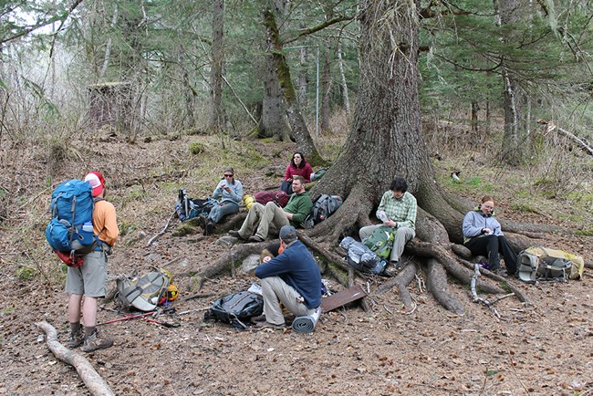 Six people sit on tree routes and talk to a standing backpacker
