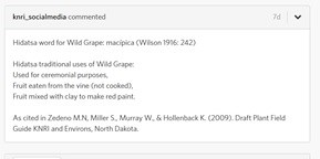 Screenshot of iNaturalist comment section. States Hidatsa word for Wild Grape, 3 traditional uses, and a reference.